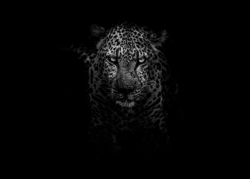 Speed leopard site Shopify
